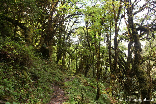 Rain forest between Tortong and Yamphuding (© Philippe Gatta)
