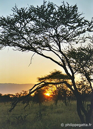 Serengeti National Park (© P. Gatta)