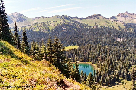 Views of Mount Rainier National Park (� P. Gatta)